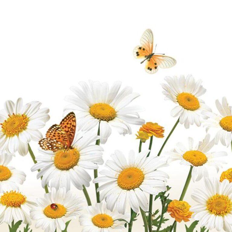 Ubrousky 33x33cm Kopretiny a motýli /SLWI004601/